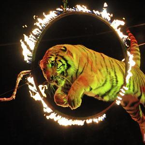 Цирки Лимана