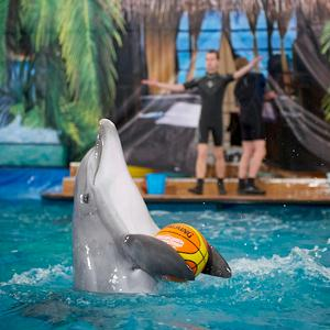 Дельфинарии, океанариумы Лимана