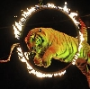 Цирки в Лимане